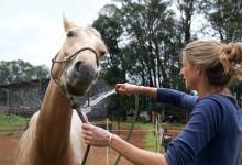 Texte – 5 330 km en Australie sur des chevaux sauvages